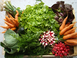 panier-de-legumes-printemps-72